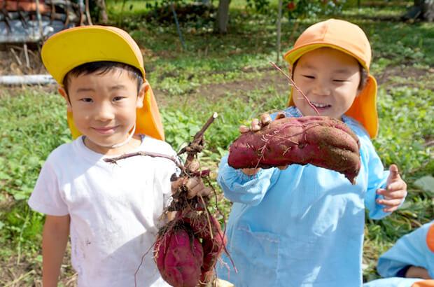 収穫する園児たちの写真